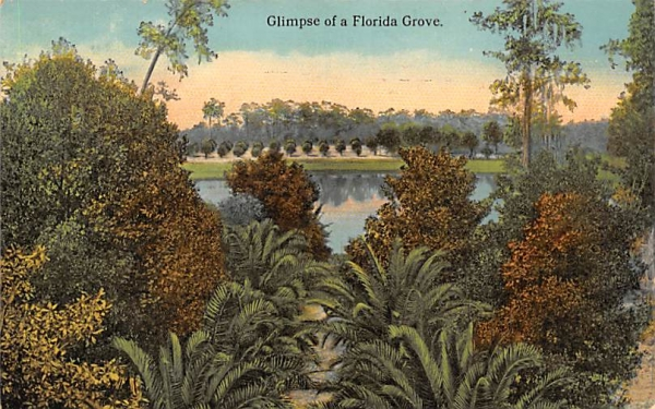Glimpse of a Florida Grove, USA Postcard