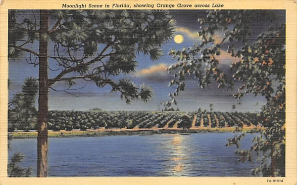 Moonlight Scene in Florida, USA Postcard