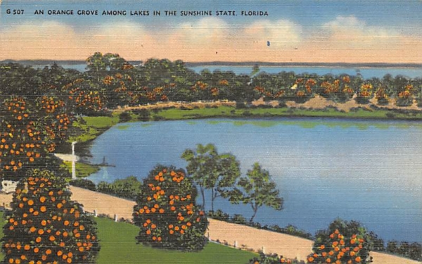 An Orange Grove Among Lakes  Orange Groves, Florida Postcard