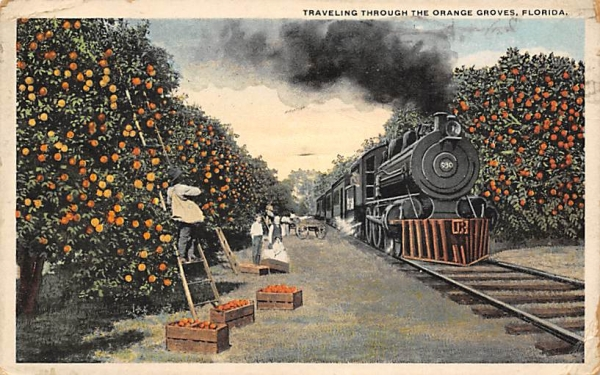 Traveling Through The Orange Groves, FL, USA Florida Postcard