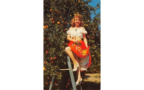 Oranges ConsideredMost Delicious, Enjoyable of All Orange Groves, Florida Postcard
