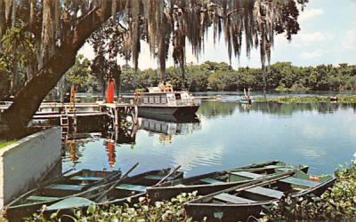 Scene on the Beautiful St. John's River Orange City, Florida Postcard