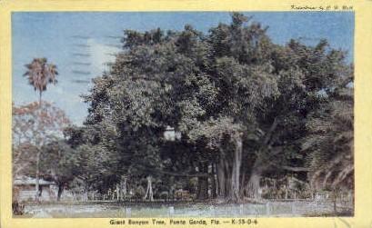 Banyan Tree - Punta Gorda, Florida FL Postcard