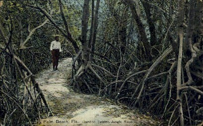 Jungle Road - Palm Beach, Florida FL Postcard