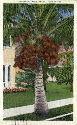 Coconuts - Palm Beach, Florida FL Postcard