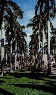 Royal Palm Way - Palm Beach, Florida FL Postcard