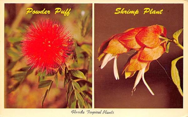 Florida Tropical Plants Postcard