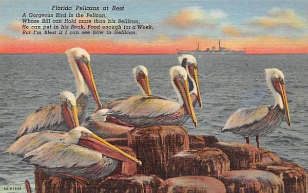 Florida Pelicans at Rest Postcard