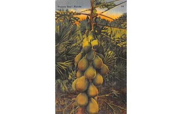 Papaya Tree Florida Postcard