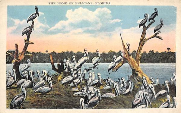 The Home of Pelicans, FL, USA Florida Postcard