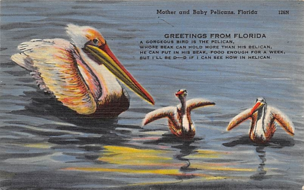 Mother and Baby Pelicans, FL, USA Florida Postcard