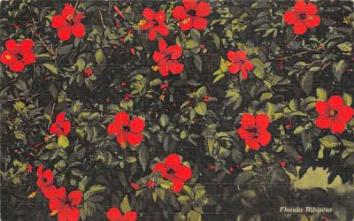 Florida Hibiscus Postcard