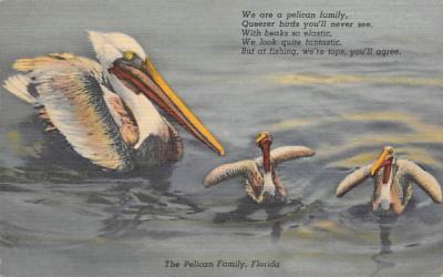 The Pelican Family, FL, USA Pelicans, Florida Postcard
