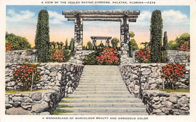 A View of the Azalea Ravine Gardens Palatka, Florida Postcard