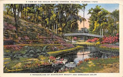 A View of the Azalea Ravine Gardens Palatka, Florida Postcard