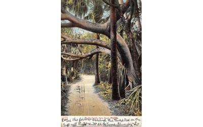 In the Jungle Palm Beach, Florida Postcard