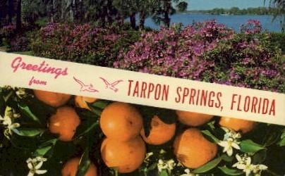 Greetings - Tarpon Springs, Florida FL Postcard
