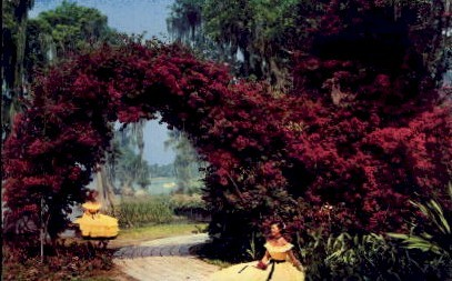Arbor of Purple Bougainvillea - Cypress Gardens, Florida FL Postcard