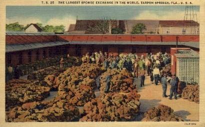 Largest Sponge Exchange in World - Tarpon Springs, Florida FL Postcard