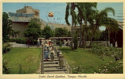 Exotic Busch Gardens  - Tampa, Florida FL Postcard