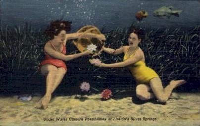 Underwater Camera Possibilities - Silver Springs, Florida FL Postcard