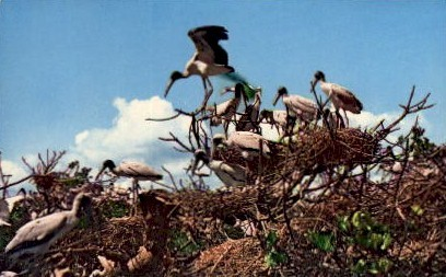 Crowded Bird Rookery - Everglades National Park, Florida FL Postcard