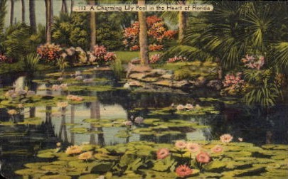 A Charming Lily Pool - Misc, Florida FL Postcard