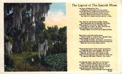 The Legend of the Spanish Moss - Misc, Florida FL Postcard