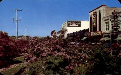 Azeleas in Bloom - Pensacola, Florida FL Postcard