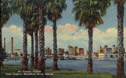 From Tropical Man-Made Davis Island - Tampa, Florida FL Postcard