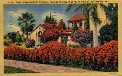 Foliage and Hedge of Flame Vine - St Petersburg, Florida FL Postcard