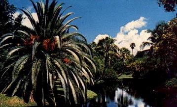 Date Palm - Sarasota, Florida FL Postcard