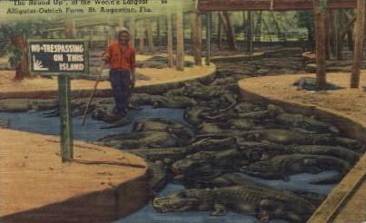 Worlds Largest Alligator Farm - St Augustine, Florida FL Postcard