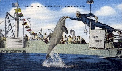 Feeding Time at Marine Studios - Marineland, Florida FL Postcard