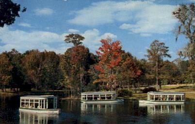Down River Scene - Silver Springs, Florida FL Postcard
