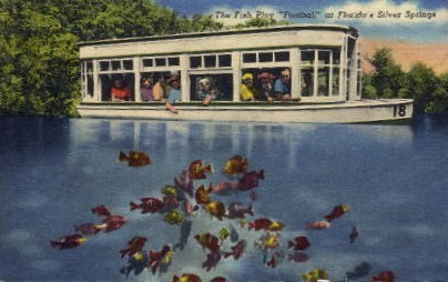 The Fish Play Football - Silver Springs, Florida FL Postcard