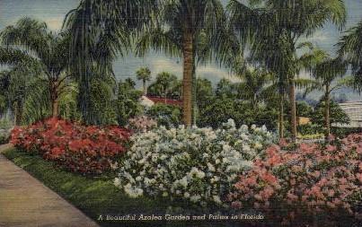 A Beautiful Azalea Garden & Palms - Misc, Florida FL Postcard