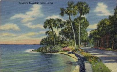 Indian River - Misc, Florida FL Postcard