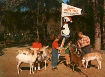 Tommy Bartlett's Deer Ranch - Silver Springs, Florida FL Postcard
