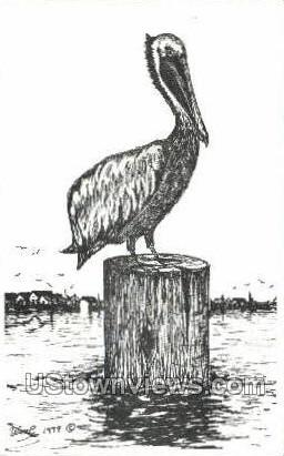 Brown Pelican - St Petersburg, Florida FL Postcard