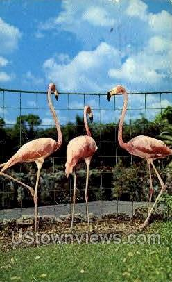 2 - Parrot Jungle, Florida FL Postcard