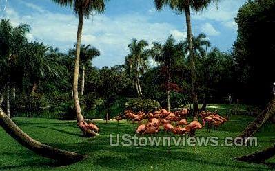 Flamingo - Sarasota, Florida FL Postcard
