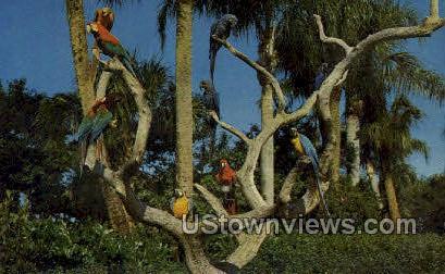 Parrot Tree - Tampa, Florida FL Postcard