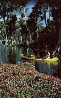 Cypress Forest - Cypress Gardens, Florida FL Postcard