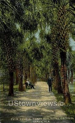 Palm Ave - Tampa, Florida FL Postcard