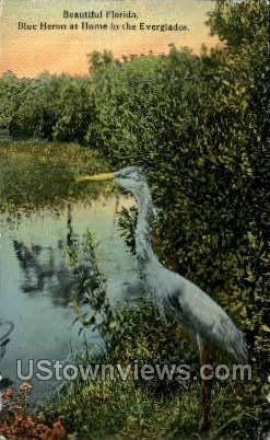 Blue Heron - Everglades, Florida FL Postcard