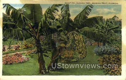 Banana Tree - Misc, Florida FL Postcard