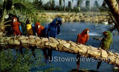 Parrots - Tampa, Florida FL Postcard