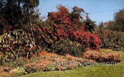 Sunken Gardens - St Petersburg, Florida FL Postcard