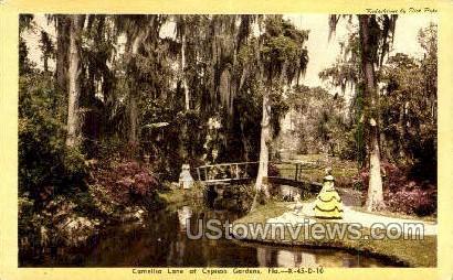 Camellia Lane - Cypress Gardens, Florida FL Postcard